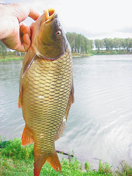 рыбалка летом карп сазан