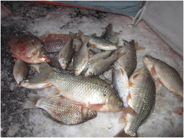 рыбалка в терновской цимлянского района